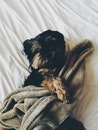 love, bed, animal