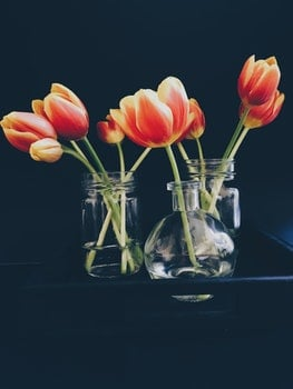 Red and Yellow Tulips in Clear Glass Jar and Vase Still Life Painting