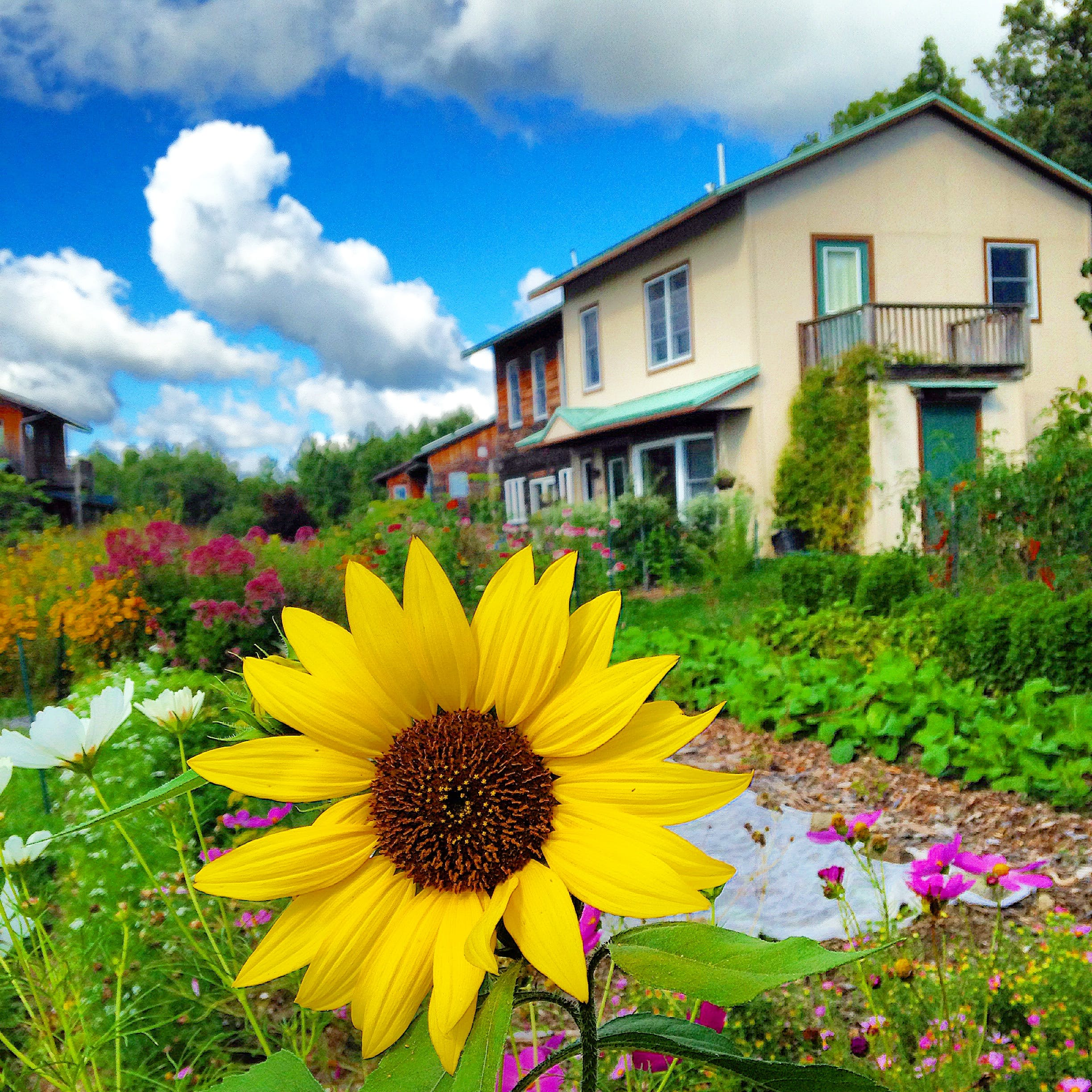 Free stock photo of cloud, clouds, Eco village, flower