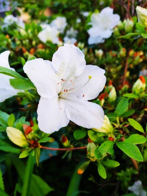 Gratis arkivbilde med #flowers, #mobilechallenge, #natur