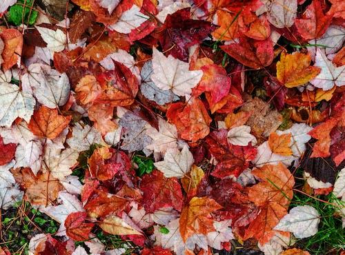 Gratis arkivbilde med #blader faller, #mobilechallenge, #natur