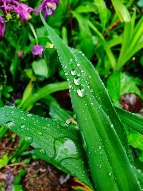 Gratis arkivbilde med #dugg, #leaves #green, #mobilechallenge, #natur