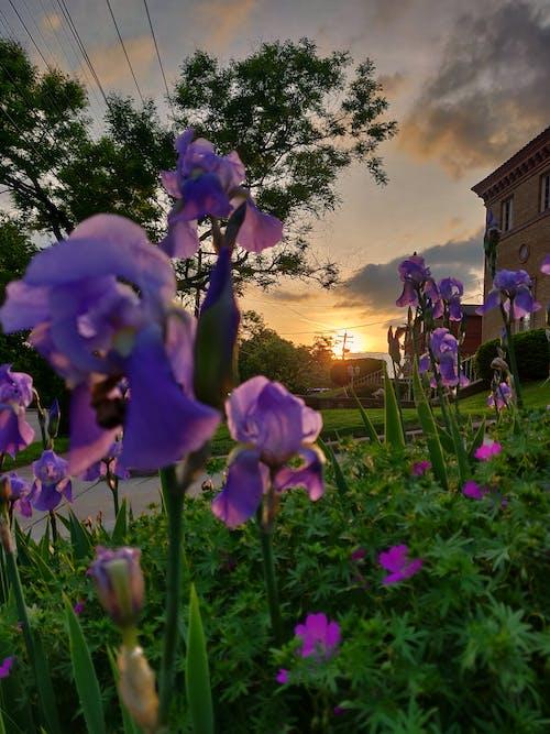 Gratis arkivbilde med #natur, #sunset #flowers