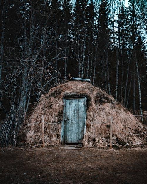 Ingyenes stockfotó erdő, faajtó, fából készült, fák témában