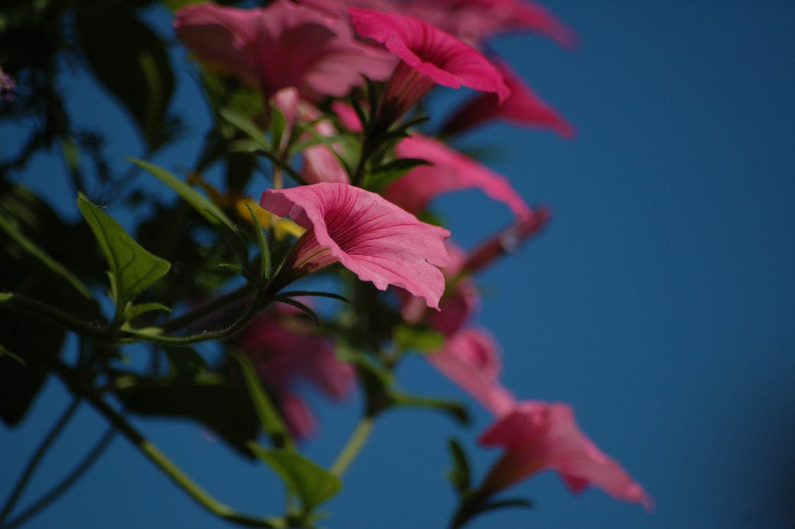 Free stock photo of flowers, summer