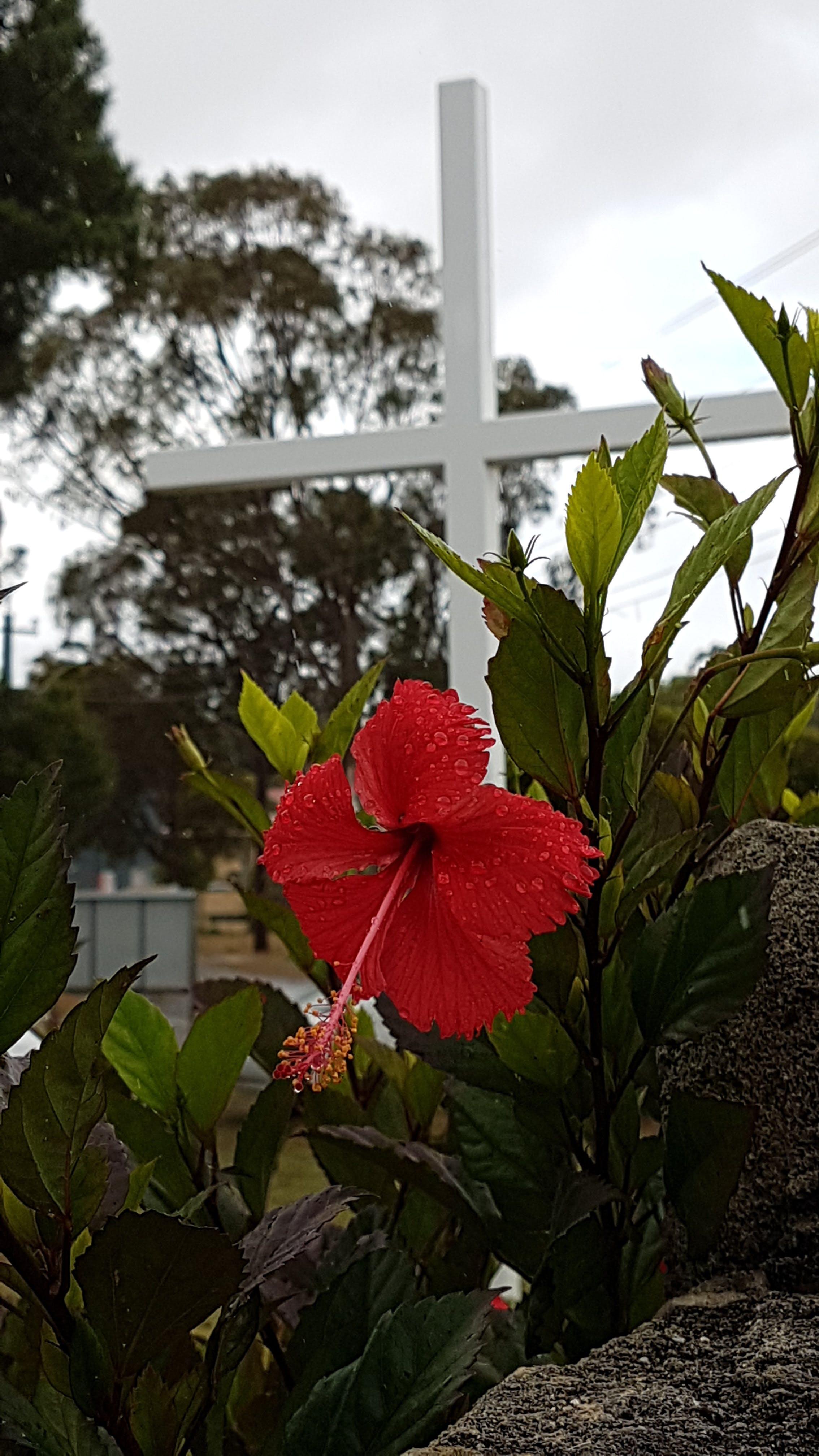 Immagine gratuita di commovente, croce, croce bianca, fiore