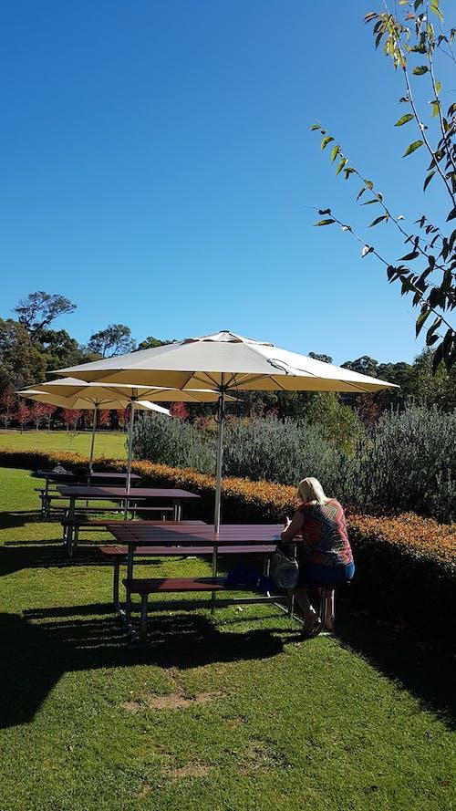 Gratis lagerfoto af borde og stole, efterår, efterårsblade, fredelig