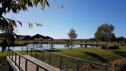 Gratis lagerfoto af bro, efterår, efterårsblade, eukalyptus