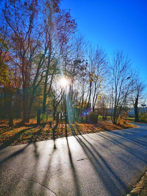 Darmowe zdjęcie z galerii z błękitne niebo, drzewa, jesień, kolorowy