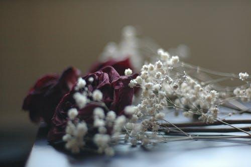 Free stock photo of christmas decor, flowers, white