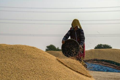 女人在桩上滴种子