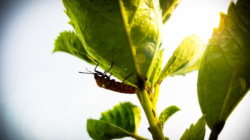 Close Up Photography of Insect on Leaf