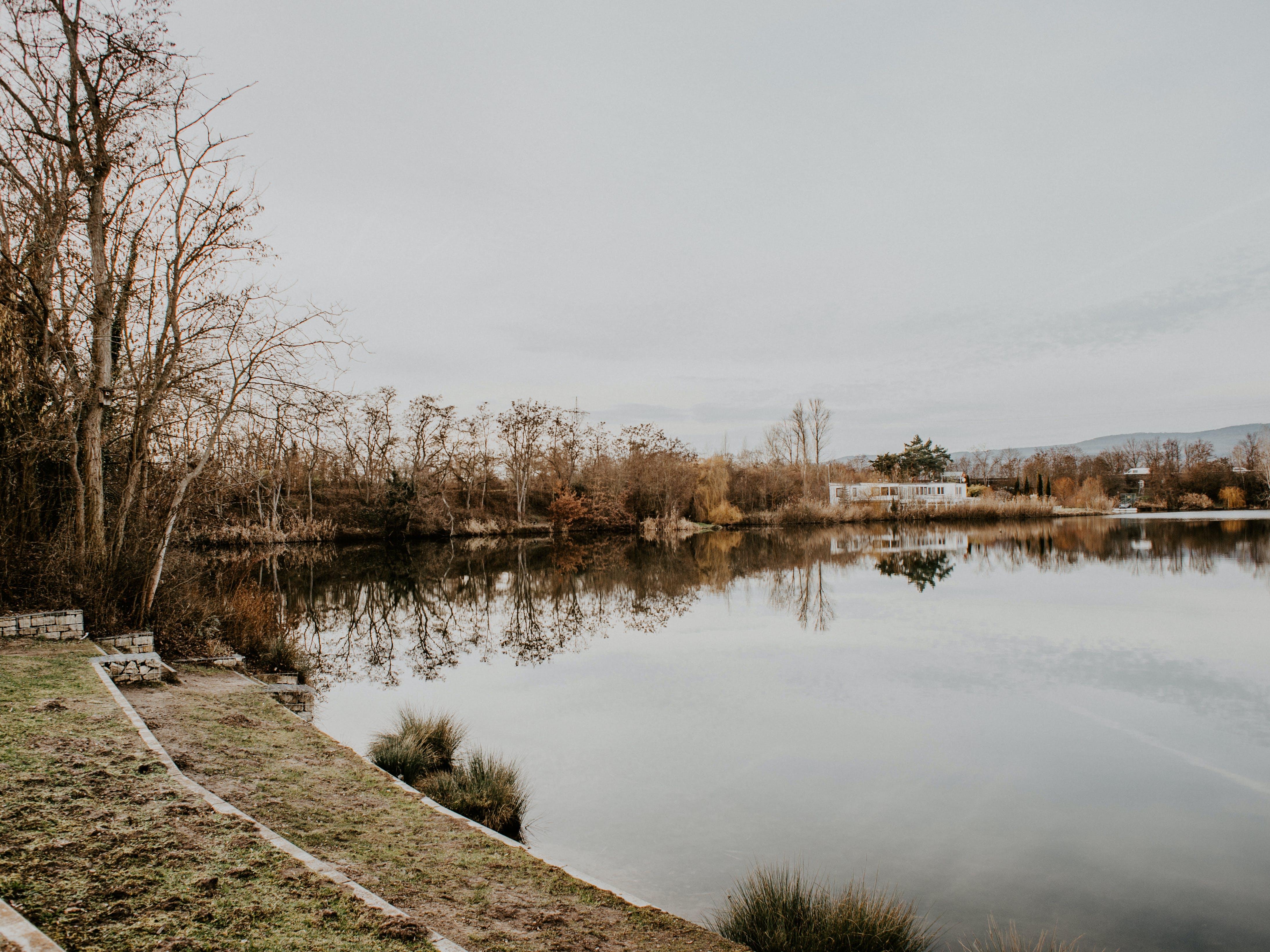 Body of Water Near Tree
