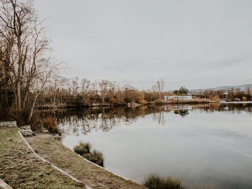 Foto d'estoc gratuïta de a l'aire lliure, aigua, arbre, arbres
