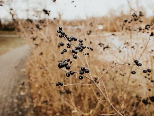 Бесплатное стоковое фото с дневной свет, зерновые, на открытом воздухе, пейзаж