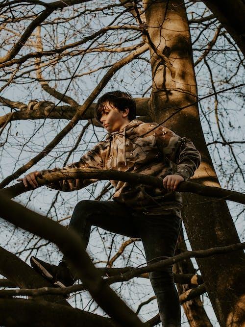 Бесплатное стоковое фото с climing, ветви деревьев, выражение лица, дерево