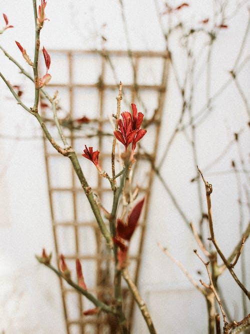 Gratis arkivbilde med blomster, blomsterblad, blomsterknopper, blomstre