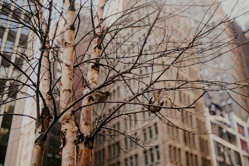 Foto d'estoc gratuïta de a l'aire lliure, arbre, arbre nu, blocs de pisos