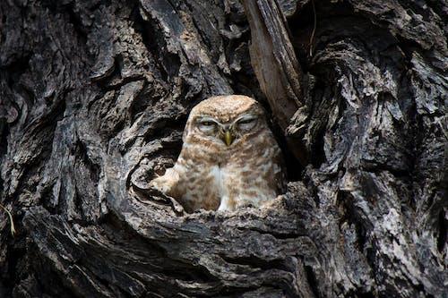baykuş, baykuşlar, orman içeren Ücretsiz stok fotoğraf