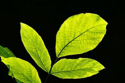 Gratis stockfoto met ader, bladeren, buiten, close-up