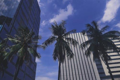 Ingyenes stockfotó ég, épületek, fák, felhő témában