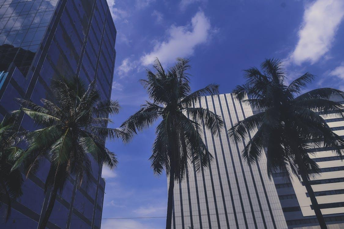 blå, by, bygninger
