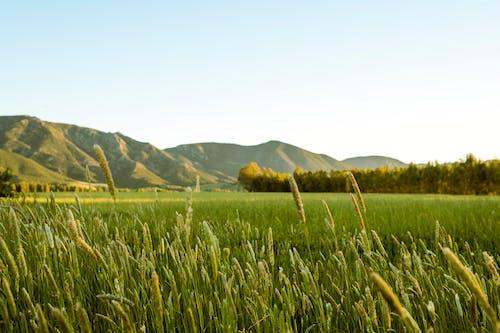 サルデーニャ, ファーム農家, フィールド, フジフィルムの無料の写真素材