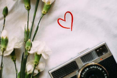 Free stock photo of camera, flower, heart, love