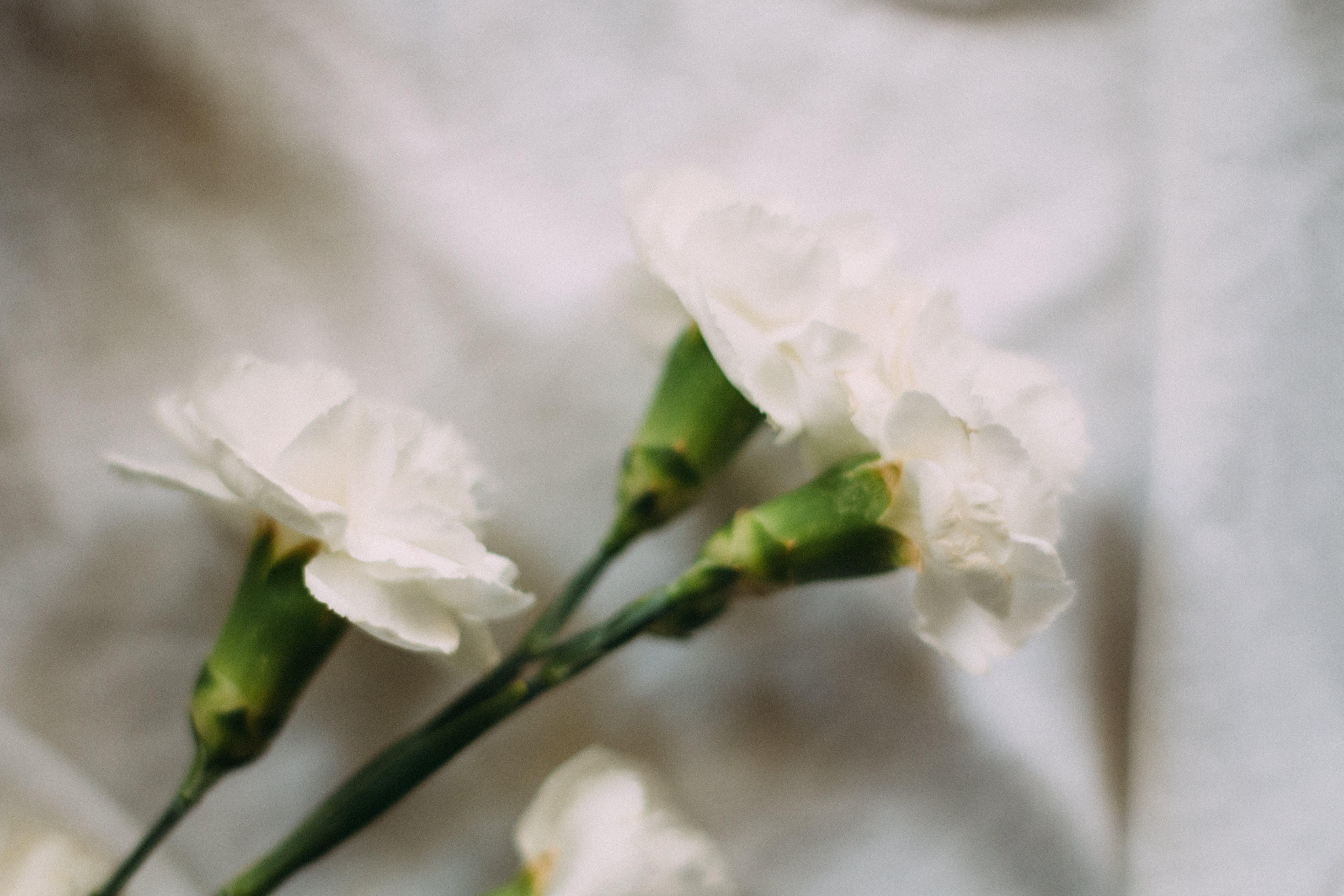 Gratis lagerfoto af blomst