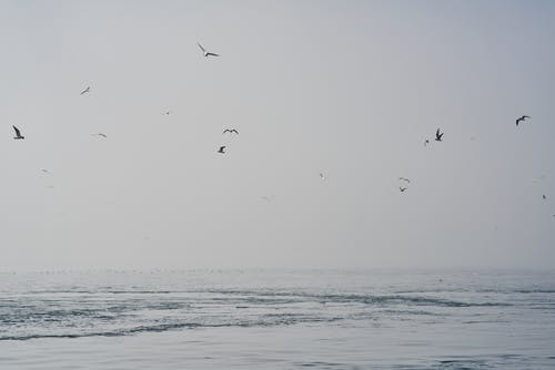 Birds Flying over Calm Sea