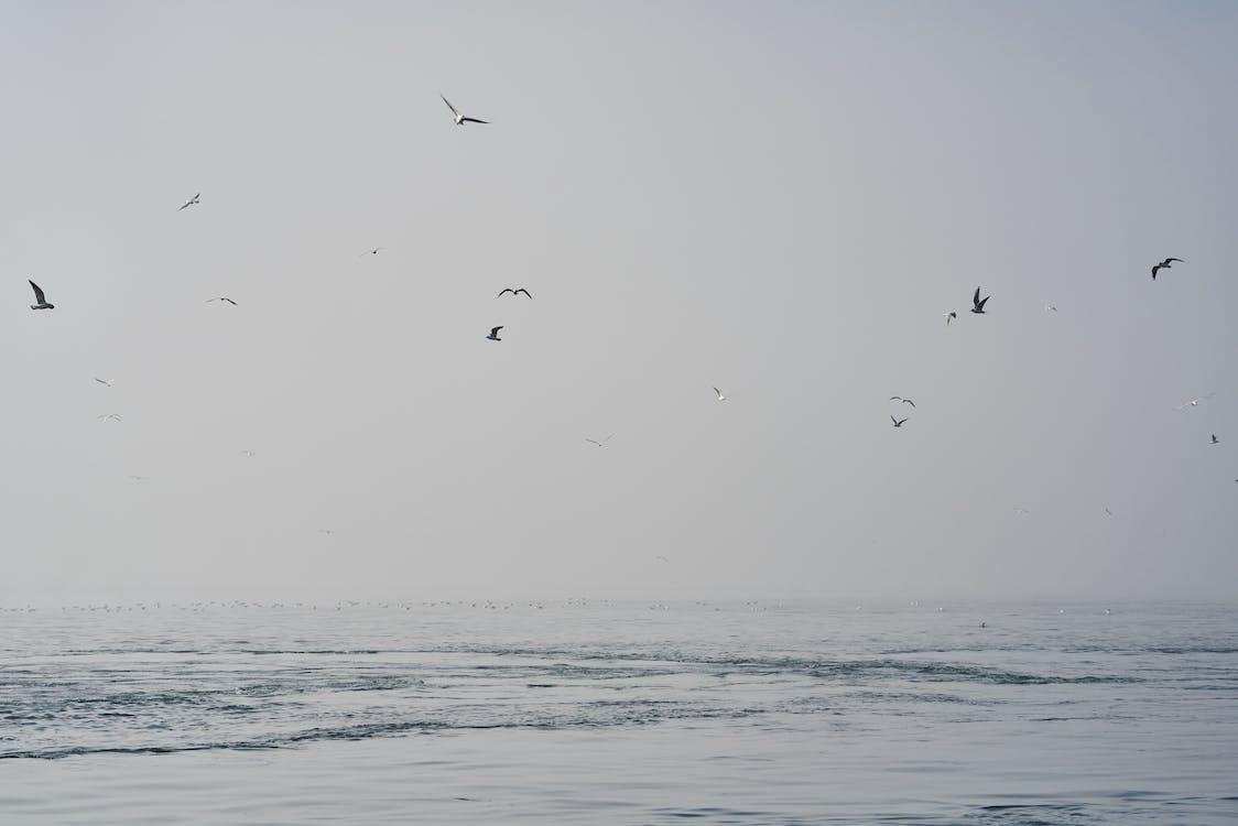 agua, al aire libre, alas