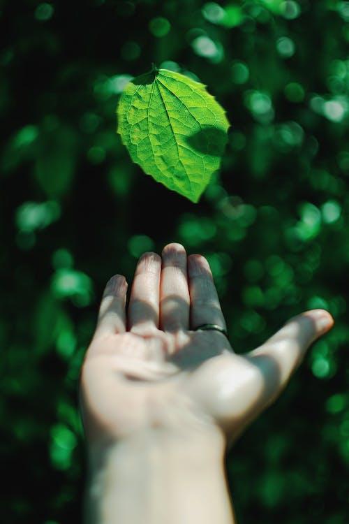 Darmowe zdjęcie z galerii z bokeh, głębia pola, liść, natura