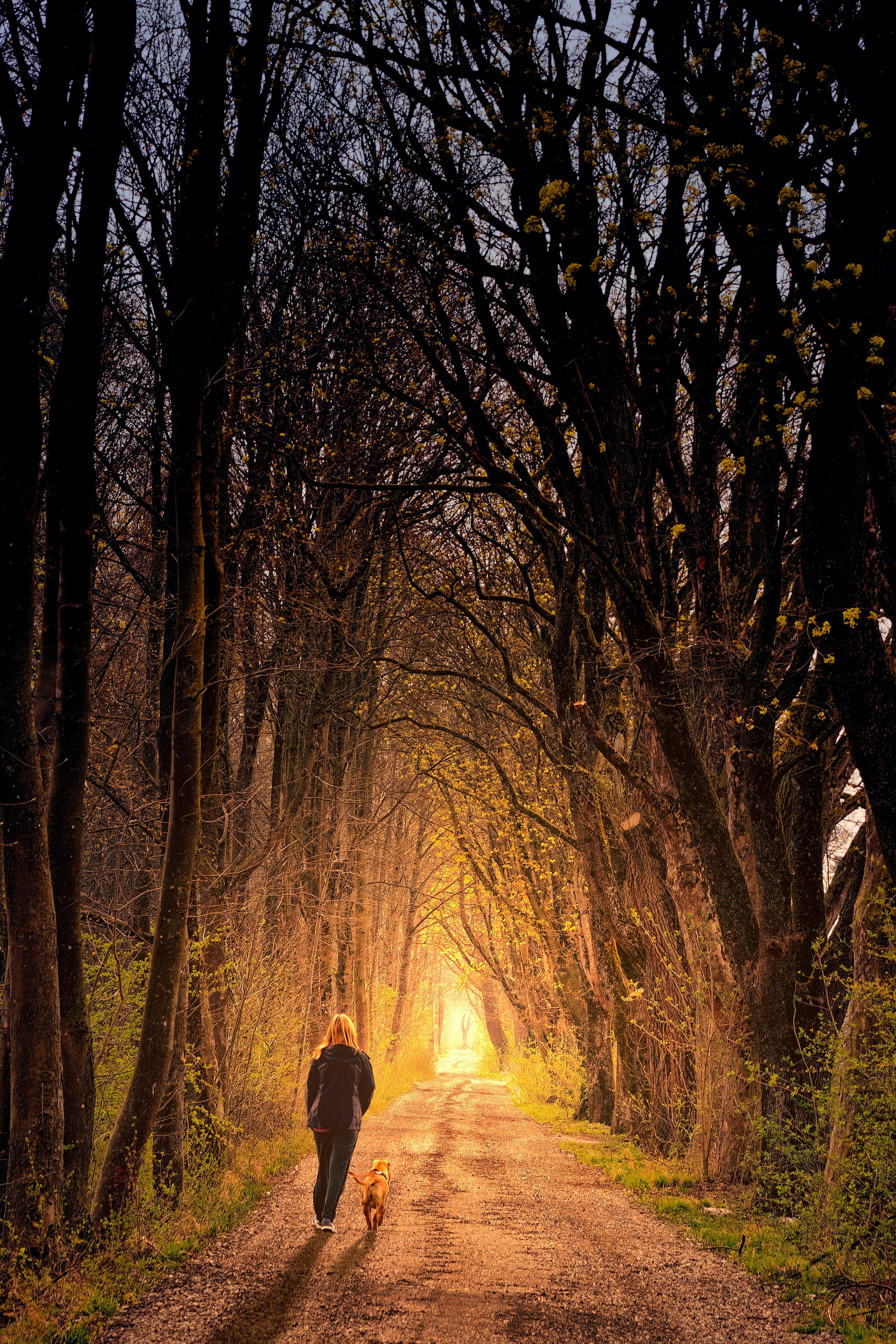 Foto d'estoc gratuïta de a l'aire lliure, alba, arbre nu, arbres