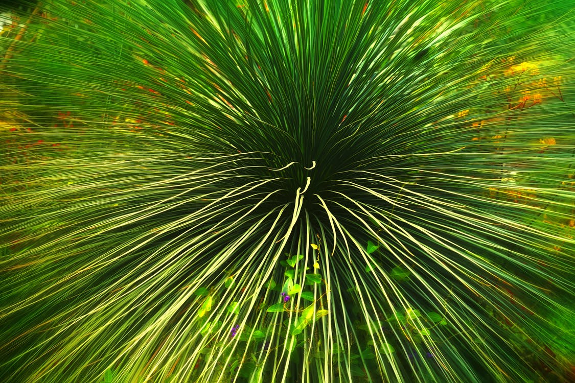 завод, зеленые листья, зеленый