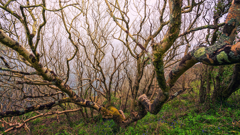 Foto d'estoc gratuïta de a l'aire lliure, arbre, arbre nu, bagul