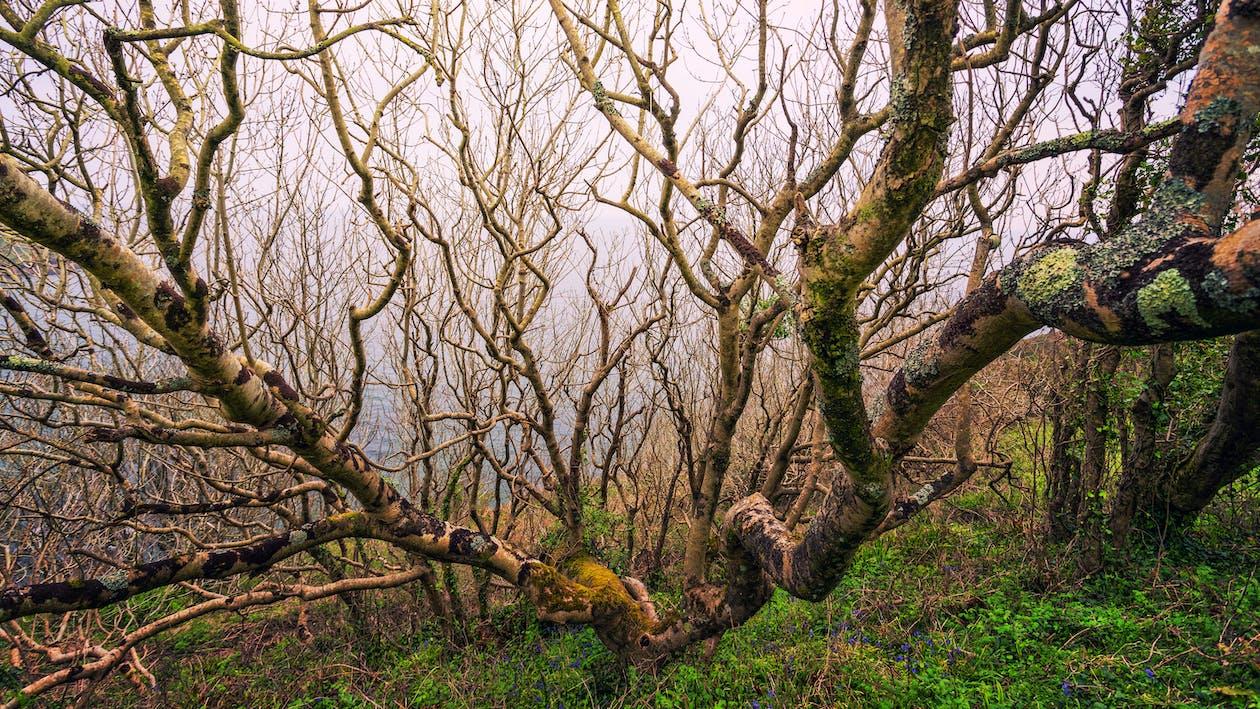 bare træ, dagslys, efterår