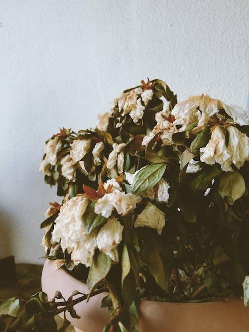 乾枯, 增長, 插花, 植物群 的 免費圖庫相片