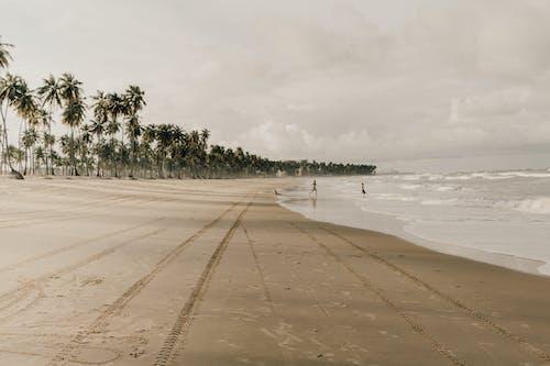Fotobanka sbezplatnými fotkami na tému Bali, Brazília, deti, dieťa