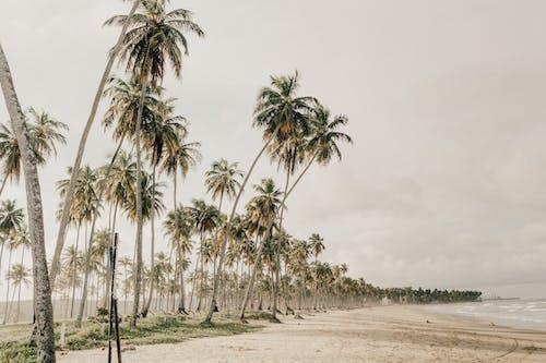 Základová fotografie zdarma na téma bali, brazílie, chladný, deštivý den