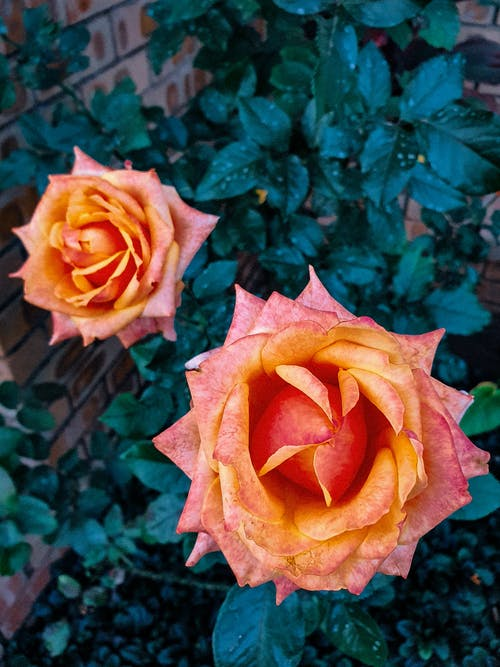 橙子, 綠色, 美麗的花朵, 花 的 免費圖庫相片