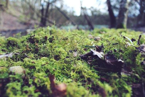 Kostnadsfri bild av #natur, grönt fält