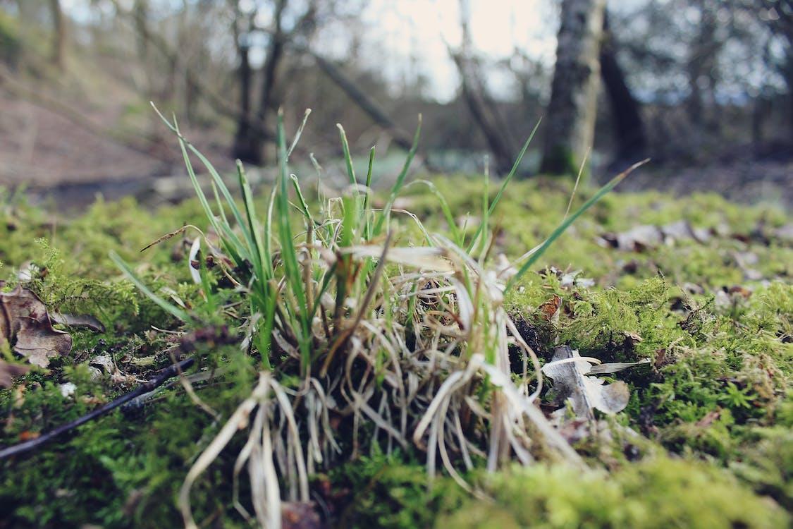 #természet, zöld mező