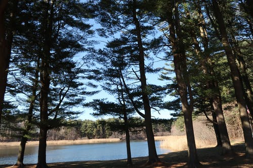 Základová fotografie zdarma na téma borovice, jezero, les, příroda