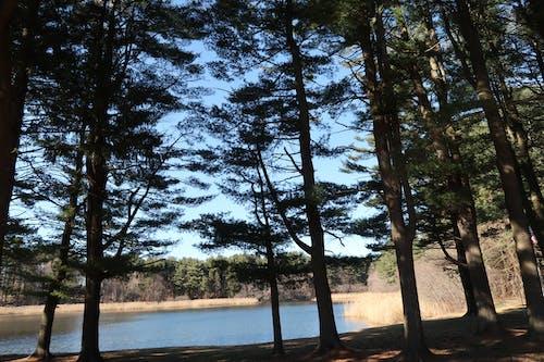 Fotos de stock gratuitas de agua, arboles, bosque