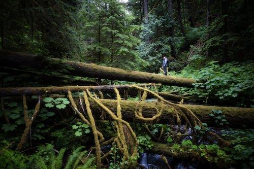 Gratis stockfoto met avontuur, berg, bladeren, bomen
