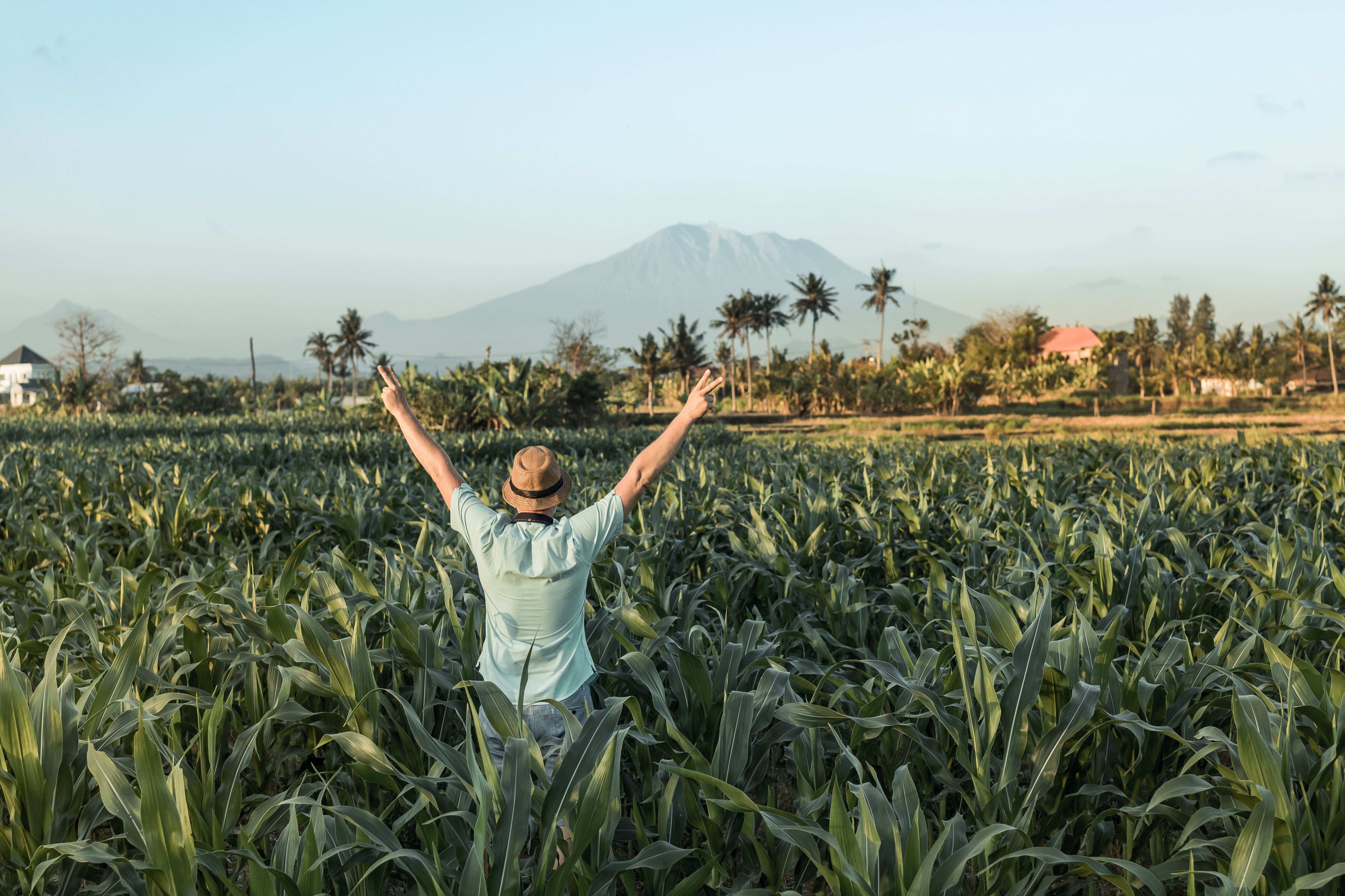 Man Standing at Middle of Cornfield