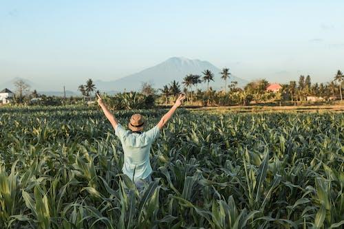 Foto d'estoc gratuïta de a l'aire lliure, agricultura, arbres, arròs