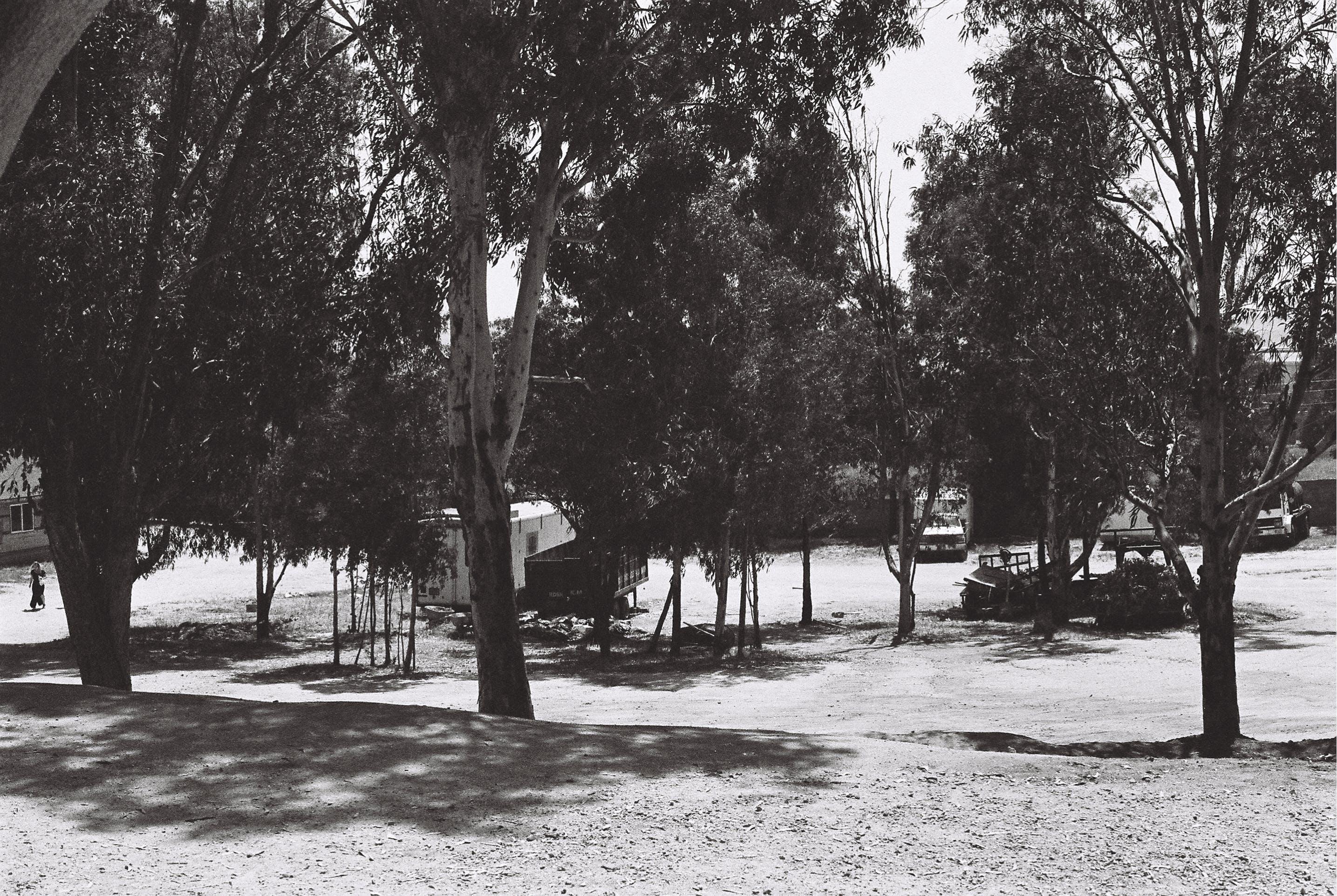 Gratis lagerfoto af park, træer