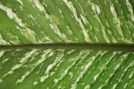 nature, texture, leaf