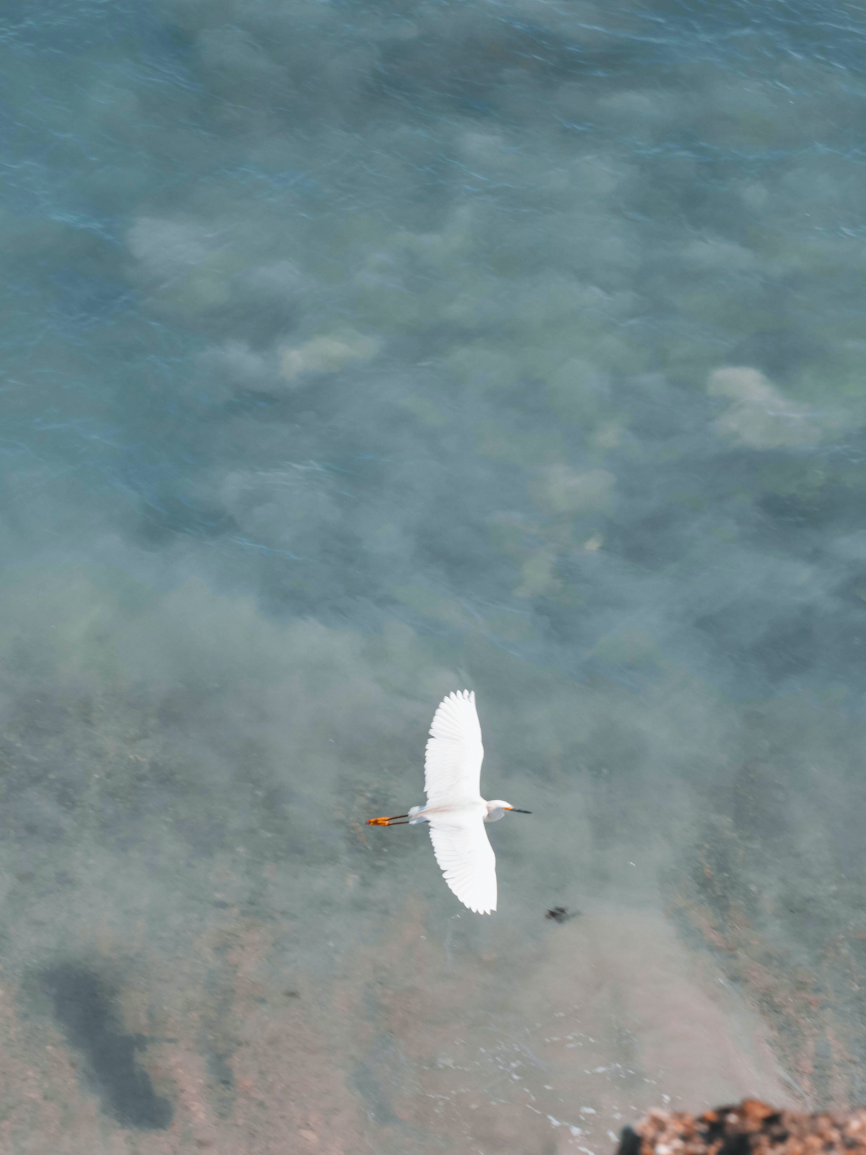 Free stock photo of animal, beach, bird, blue